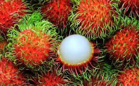 rambutan fruta
