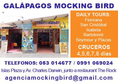 AGENCIA MOCKING BIRD santa cruz