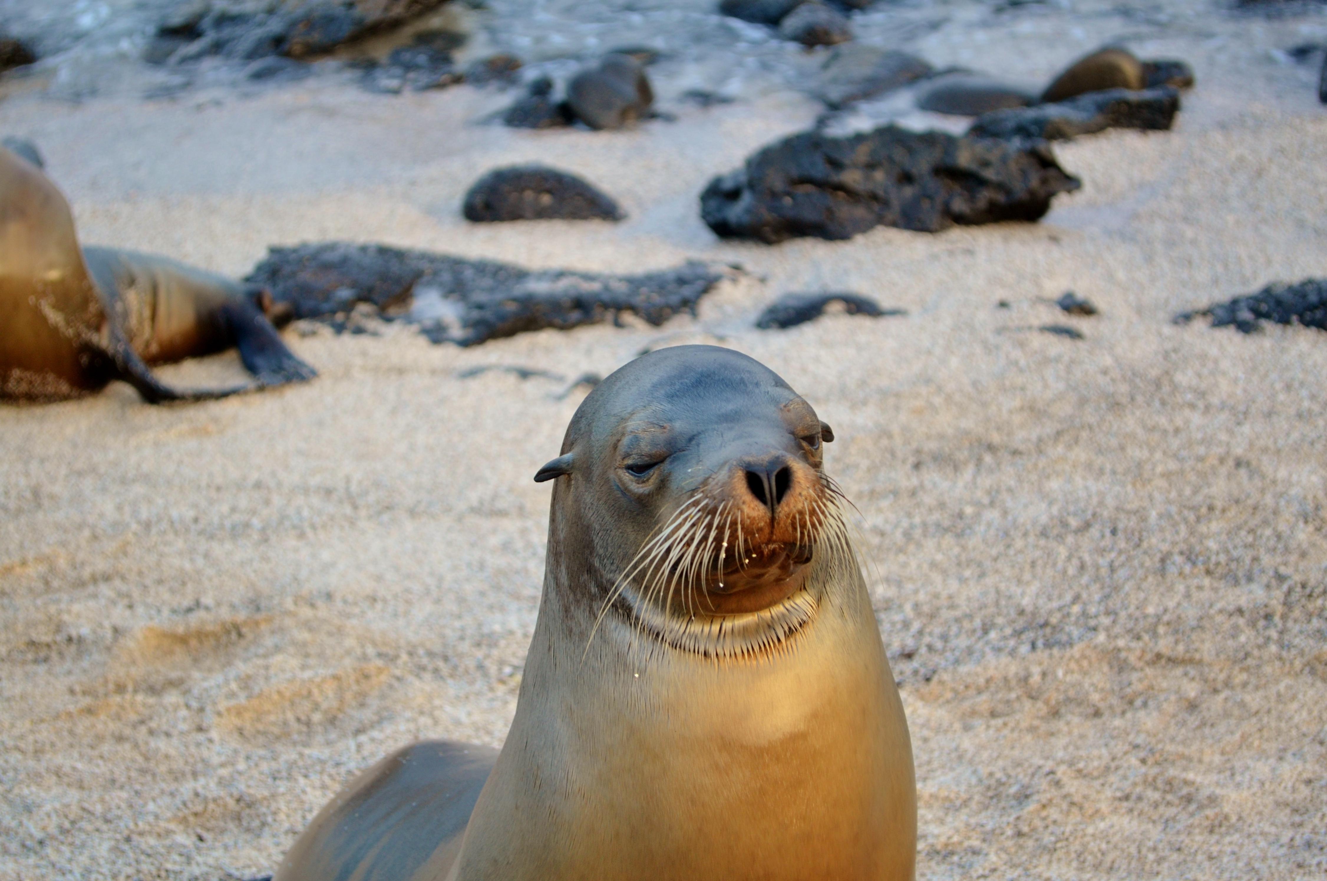 Islas de Galapagos La Loberia San Cristobal
