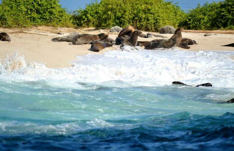 Islas de Galapagos La Loberia Santa Cruz
