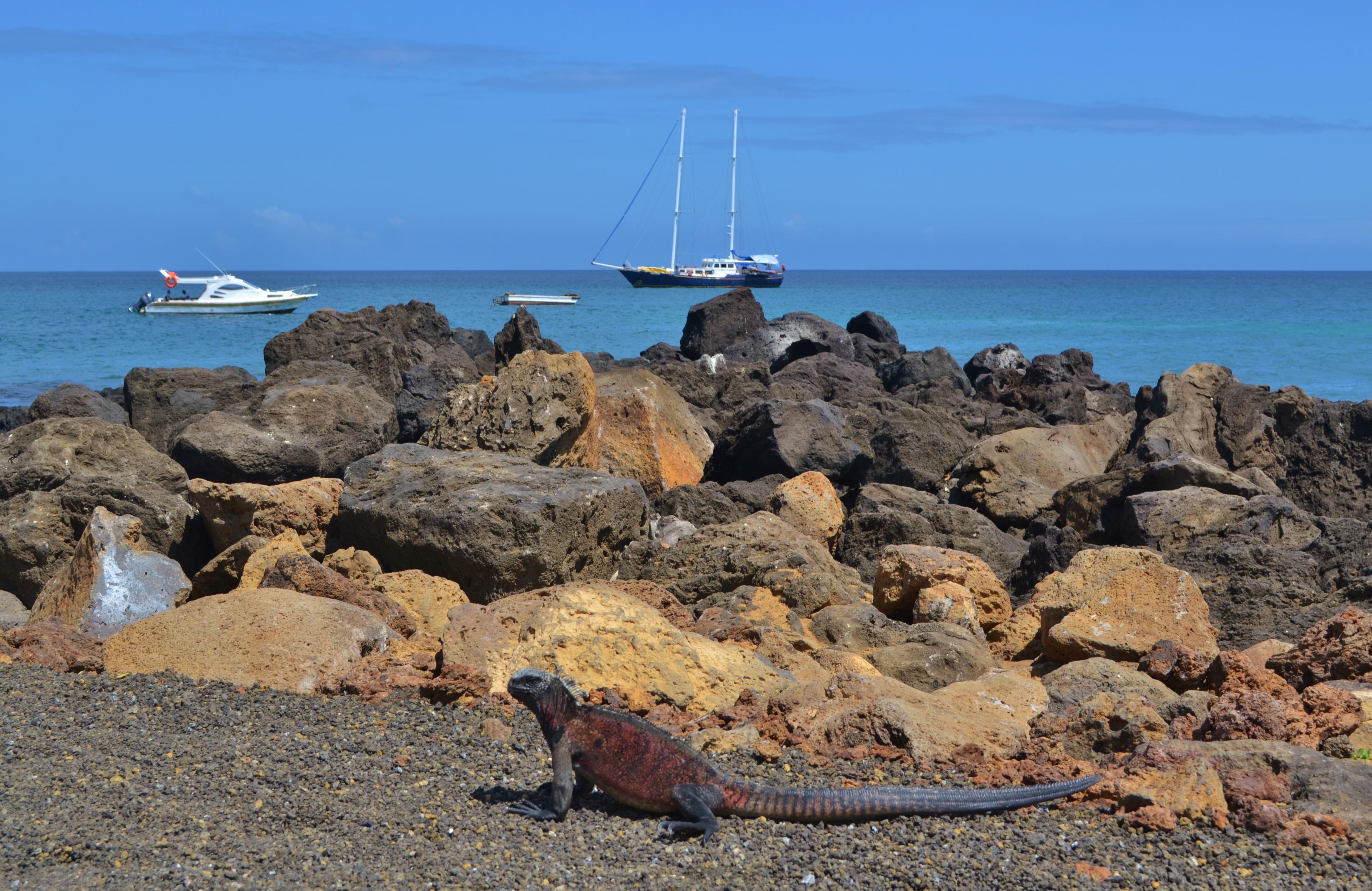 Islas de Galapagos sea iguana