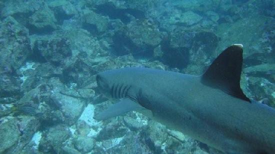 shark-kicker-rock