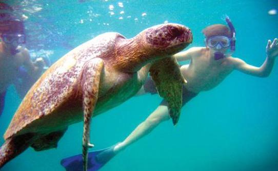 galapagos turtle snorkel