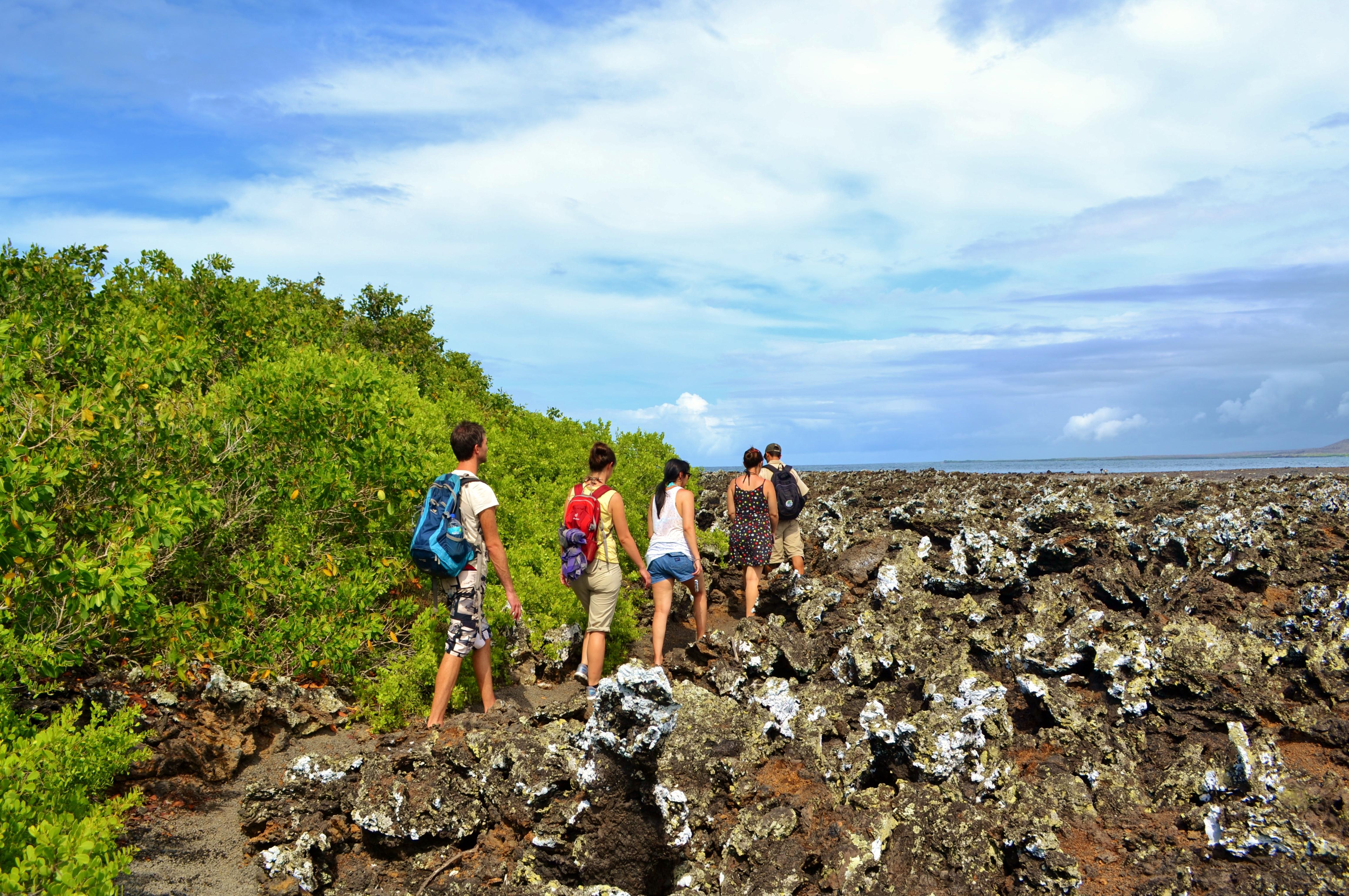 Islas de Galapagos las tintoreras isabela