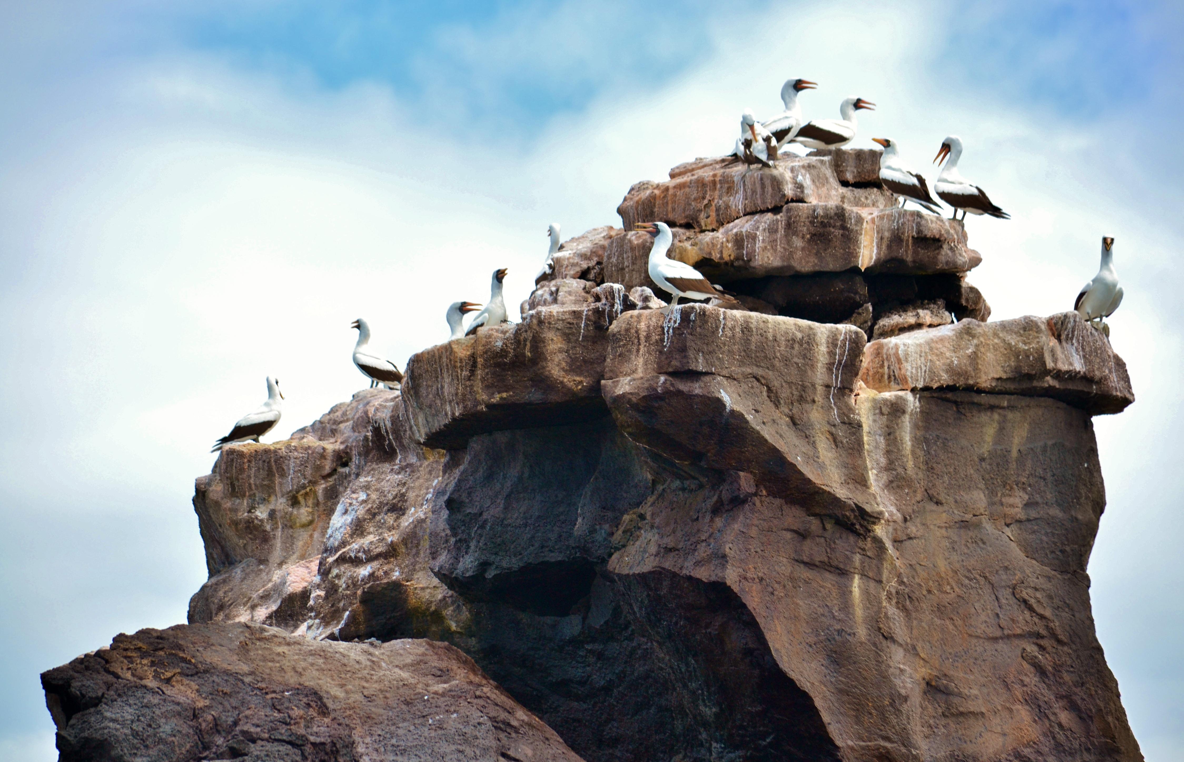 Islas de Galapagos isabela union rock