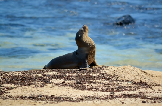 Islas de Galapagos san cristbal sea lion
